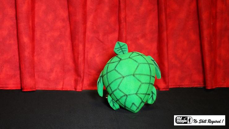 Egg to Tortoise - magic