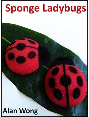 Sponge Lady Bugs - magic