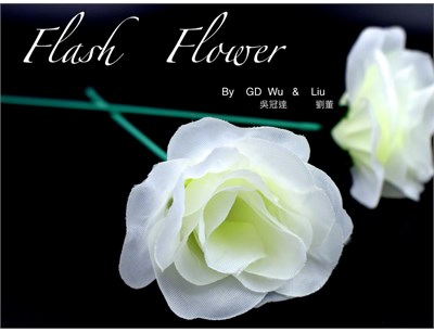 White Flash Flower  - magic