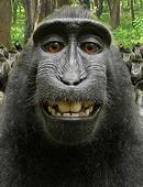 Hundredth Monkey DVD
