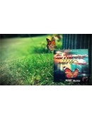 The Butterfly Effect DVD