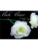 White Flash Flower  Trick